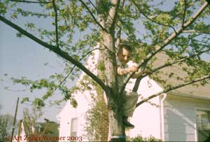 Art in his climbing tree, Linthicum, MD, spring 1960