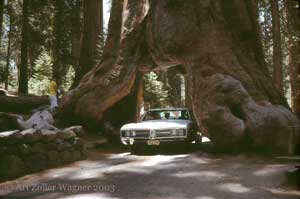 Seeing America First with the Wagner family, Sequoia National Forest, California, 1968